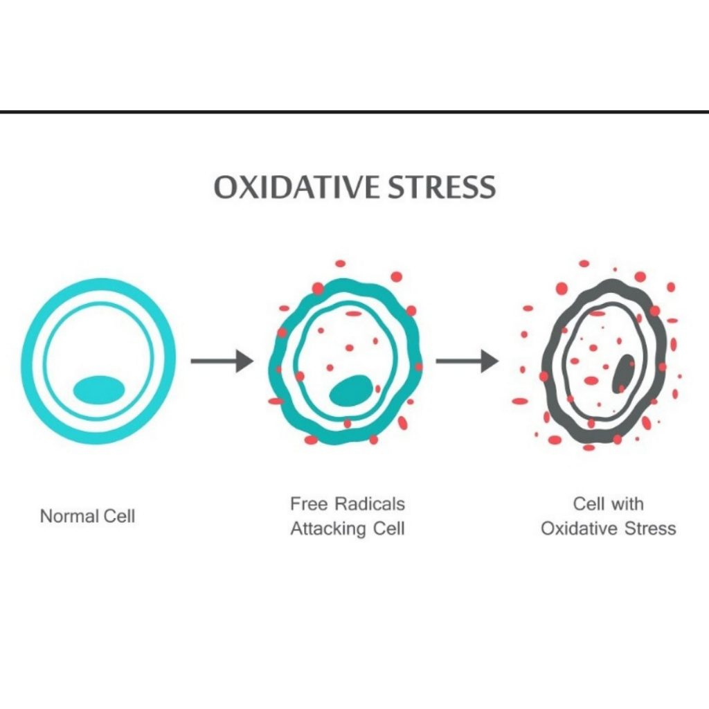 oxydative stress to the cell
