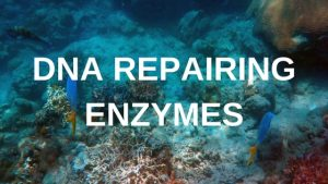 DNA repairing enzymes derived from marine plankton
