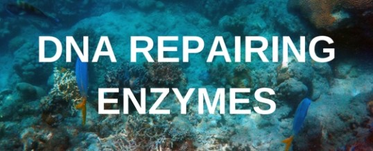 Repair and rejuvenate your skin with DNA repairing enzymes